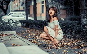 Фотография Азиаты Сидящие Платье Лист Смотрит Девушки