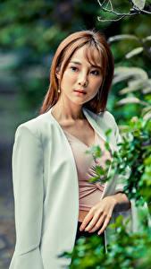Фотографии Азиатки Боке Ветвь Шатенки пиджак