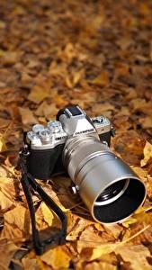 Обои Осенние Фотоаппарат Листья Olympus OM-D