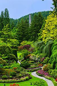 Фото Канада Сады Газон Кустов Дерева Butchart Gardens Victoria