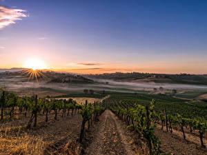Фотографии Италия Тоскана Пейзаж Поля Рассветы и закаты Кусты