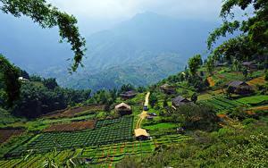 Картинка Вьетнам Поля Здания Muong Hoa Valley Sapa Природа