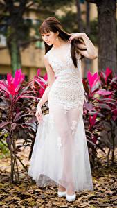 Фото Азиатки Шатенки Платье Девушки