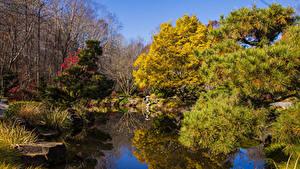 Фотография Штаты Осенние Парки Пруд Деревья Ель Gibbs Gardens Природа