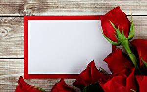 Фото Розы Шаблон поздравительной открытки Красный Цветы