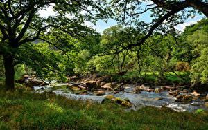Фото Англия Речка Камни Трава Ветвь West Dart River Dartmoor Природа