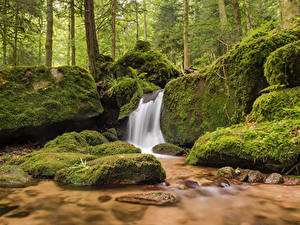 Фото Германия Лес Камень Водопады Мох Gertelbach waterfalls Природа