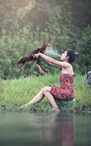 Картинки Петух Азиаты Трава С брызгами Брюнетка Сидящие Девушки