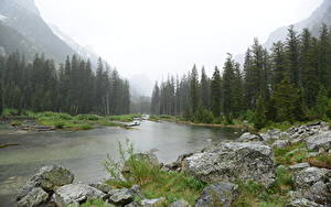 Фотография США Реки Парки Леса Камень Трава Grand Teton National Park, Snake River, Wyoming Природа