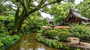 Фото Сингапур Парки Пруд Деревья Кусты Природа
