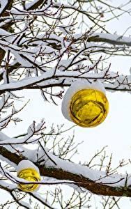 Фото Зимние Снег Ветвь Шар