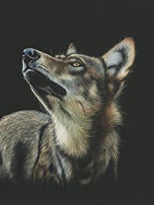 Картинки Волки Рисованные Черный фон Животные