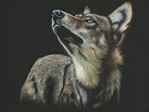 Картинки Волки Рисованные На черном фоне животное
