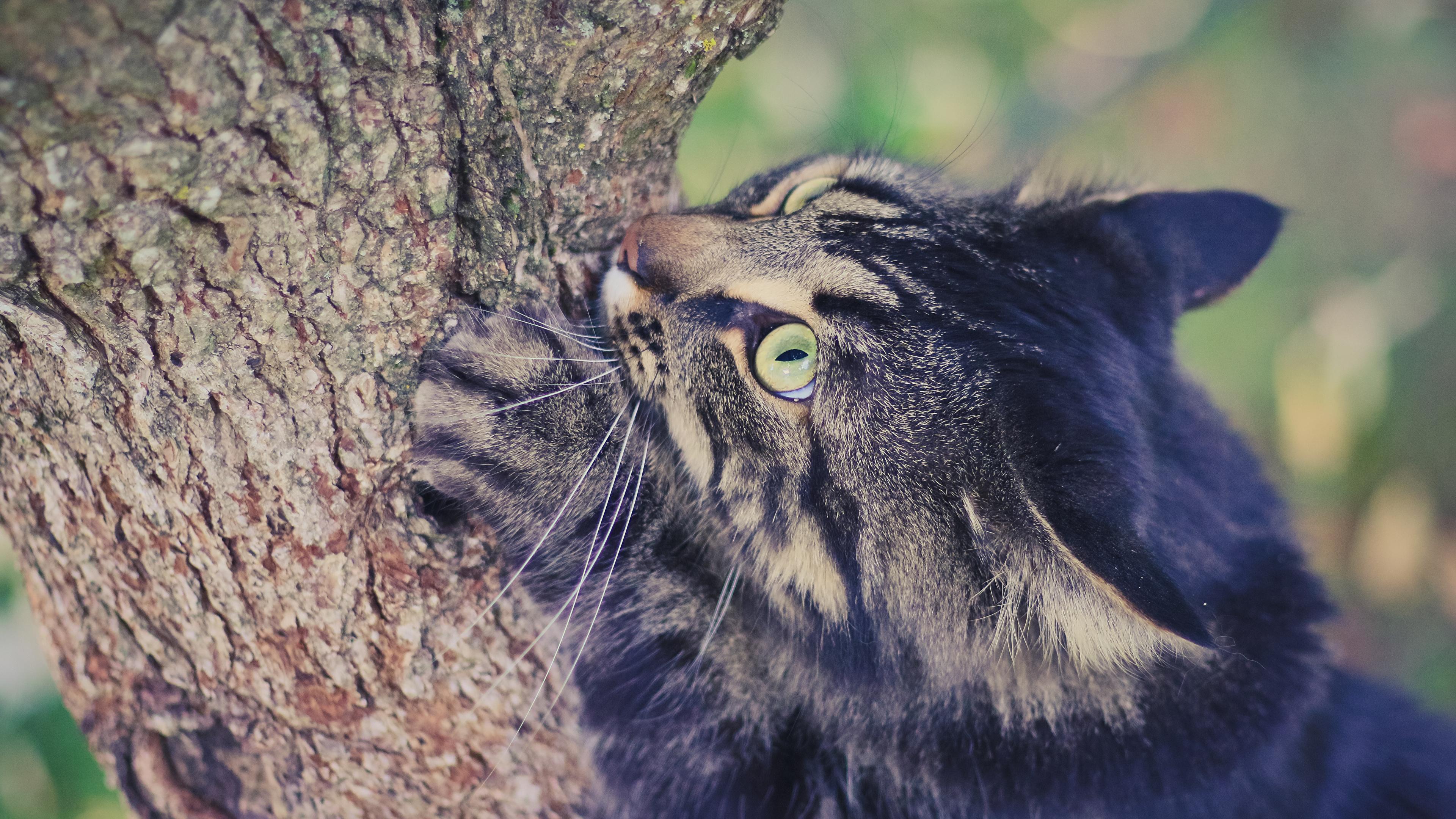 кот дерево кора без смс