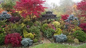 Фото Англия Сады Пагоды Кустов Walsall Garden Природа