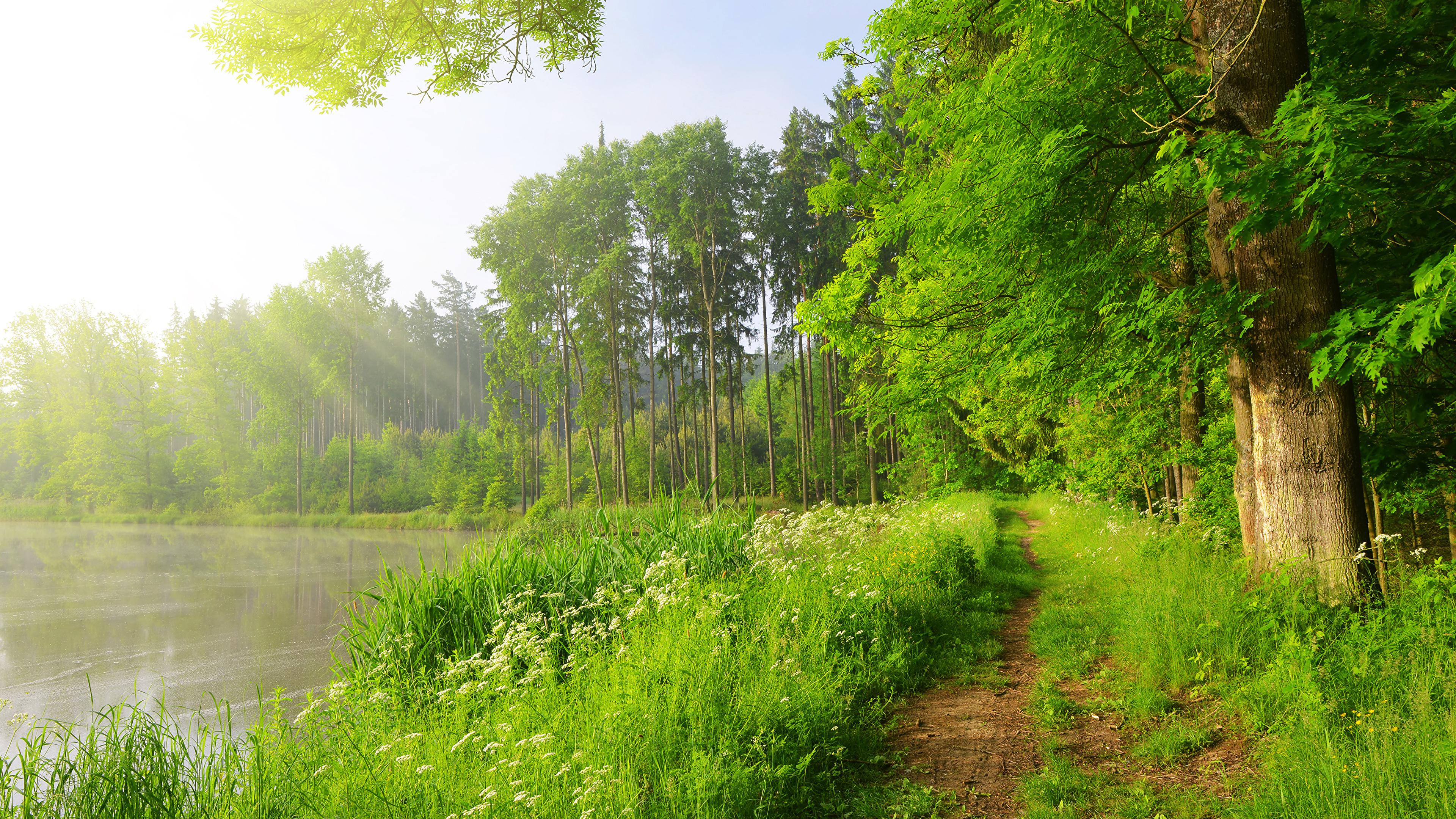 озеро зелень деревья лето the lake greens trees summer без смс