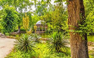 Картинка Испания Парки Пруд Ствол дерева Кусты Деревья Maria Luisa Park Sevilla Природа