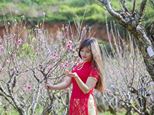 Картинка Азиаты Сады Цветущие деревья Весна Ветки Шатенка