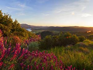 Обои Штаты Парки Львиный зев Йосемити Кусты Трава Природа