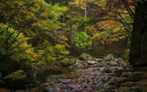 Фотография Леса Камень Ручей Мха Природа