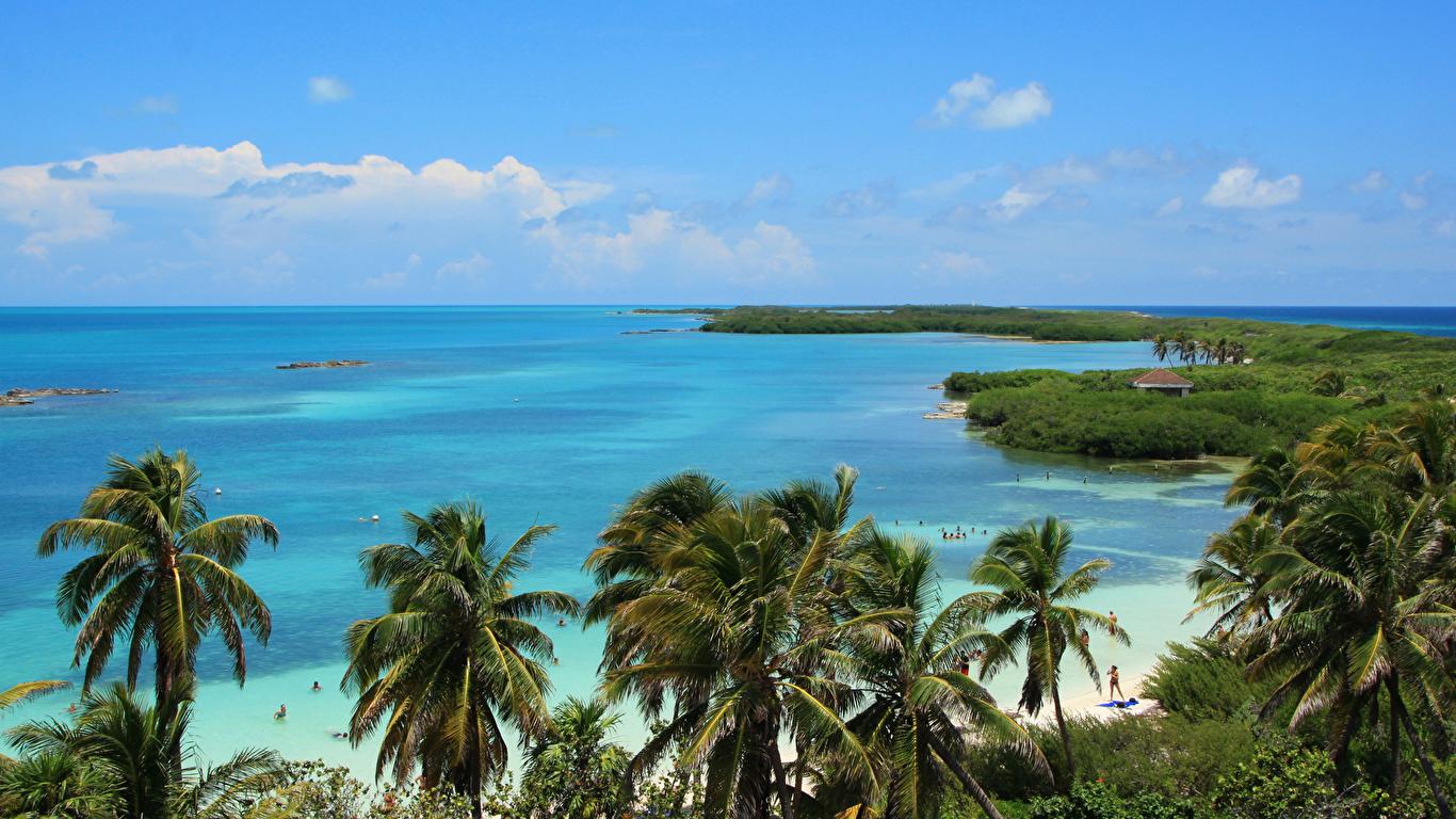 Обои для рабочего стола Мексика Cancun Море Природа Пальмы берег 1366x768 пальм пальма Побережье