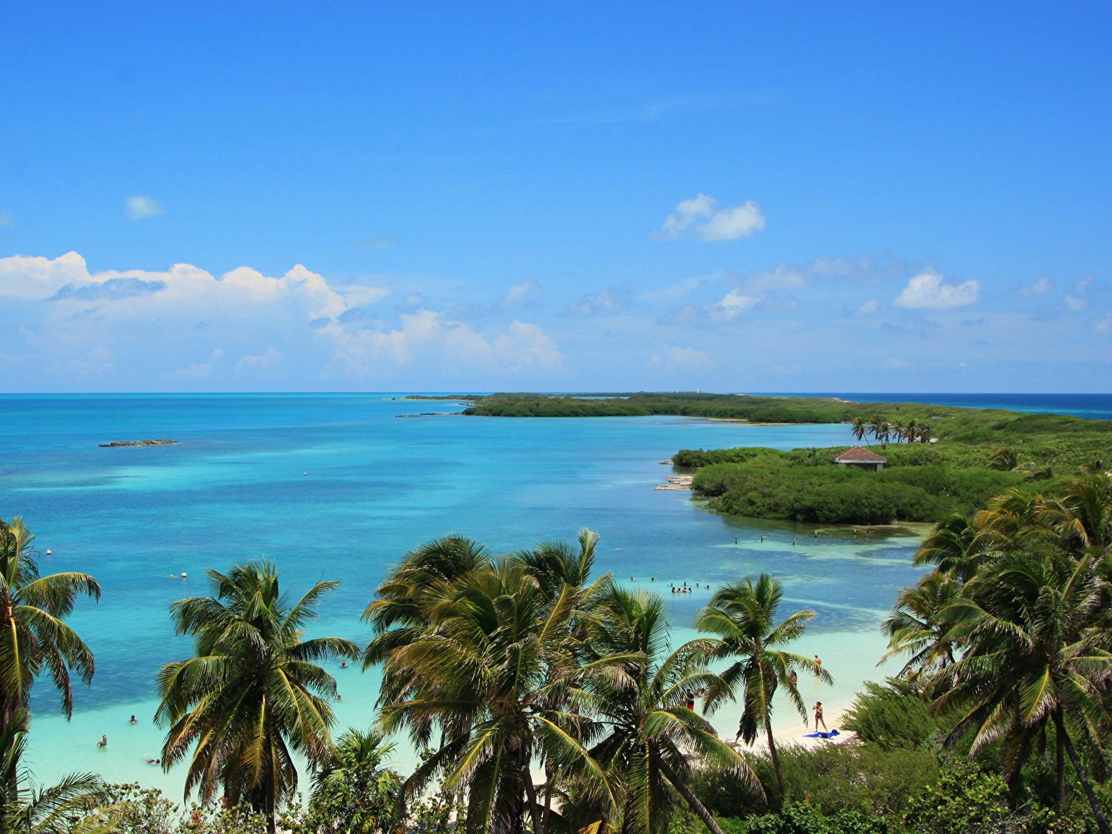 Обои Мексика Cancun Море Природа Пальмы берег 1600x1200 пальм пальма Побережье