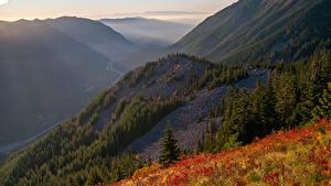 Фото Штаты Горы Леса Техас Трава Природа