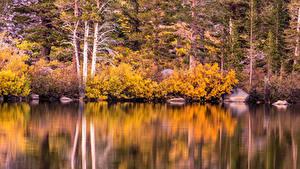 Картинка США Озеро Осень Леса Камни Калифорнии Кустов Mammoth Lakes Природа