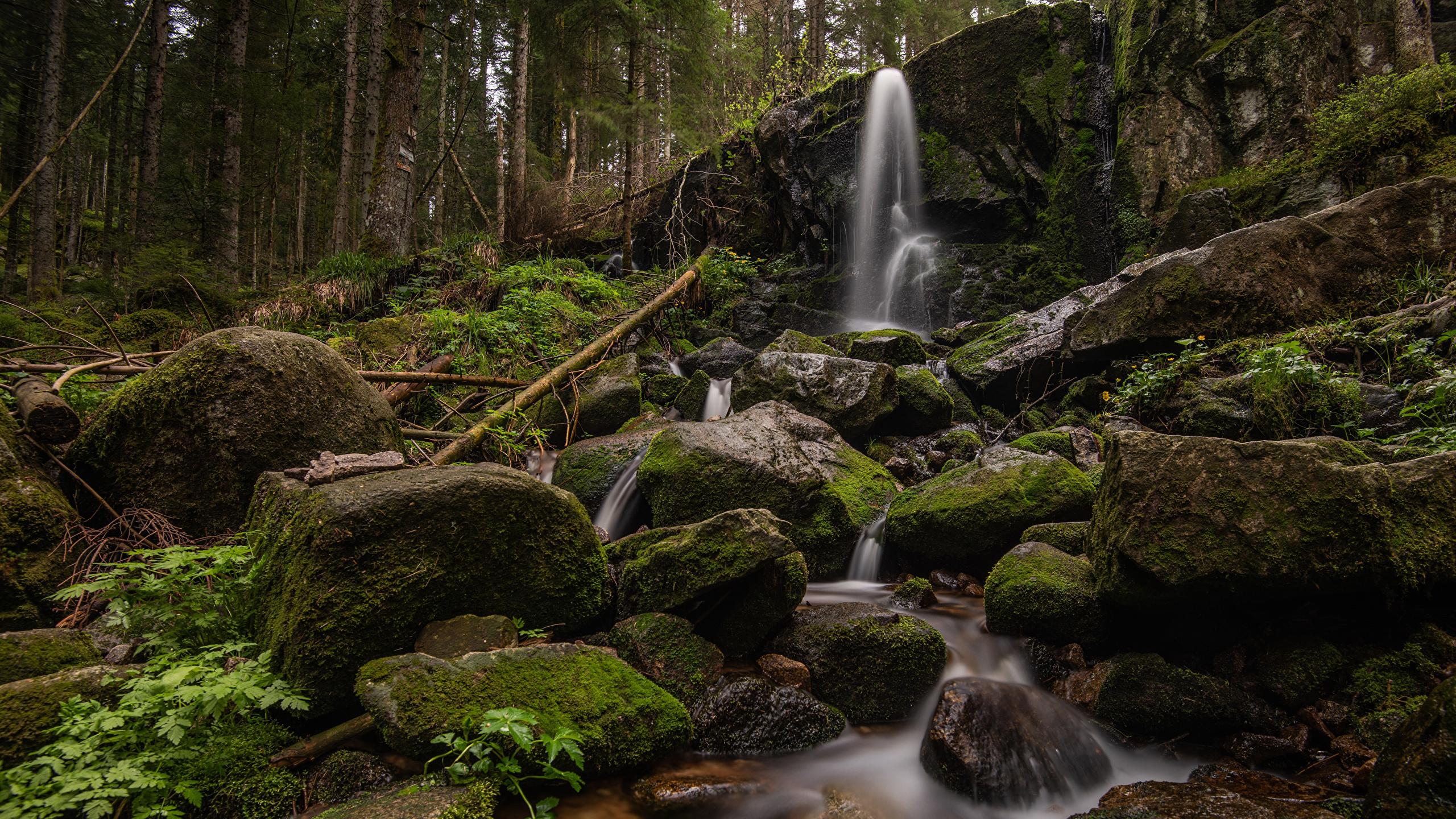 Фотографии Франция Cascade de Merelle скале Природа Водопады Леса Мох Камни 2560x1440 Утес скалы Скала мха мхом Камень