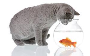 Картинка Кот Рыбы Вода Белом фоне 2 Серый Животные