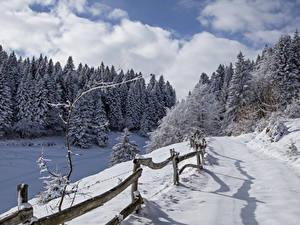 Фотографии Италия Зима Леса Дороги Снег Ель Забор Alta Badia Природа