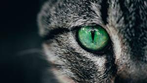 Обои для рабочего стола Глаза Вблизи Коты животное
