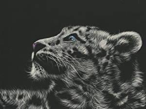Фотография Большие кошки Рисованные Барсы Голова Черный фон Усы Вибриссы Черно белые Животные