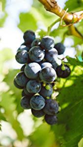 Фото Виноград Лист Продукты питания