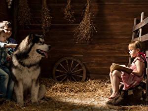 Фото Собаки Аляскинский маламут Втроем Мальчишка Девочки Сено Ребёнок Животные