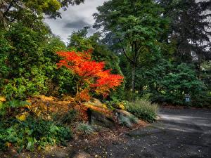 Картинка Канада Парк Ванкувер Деревья Кусты VanDusen Botanical Garden Природа