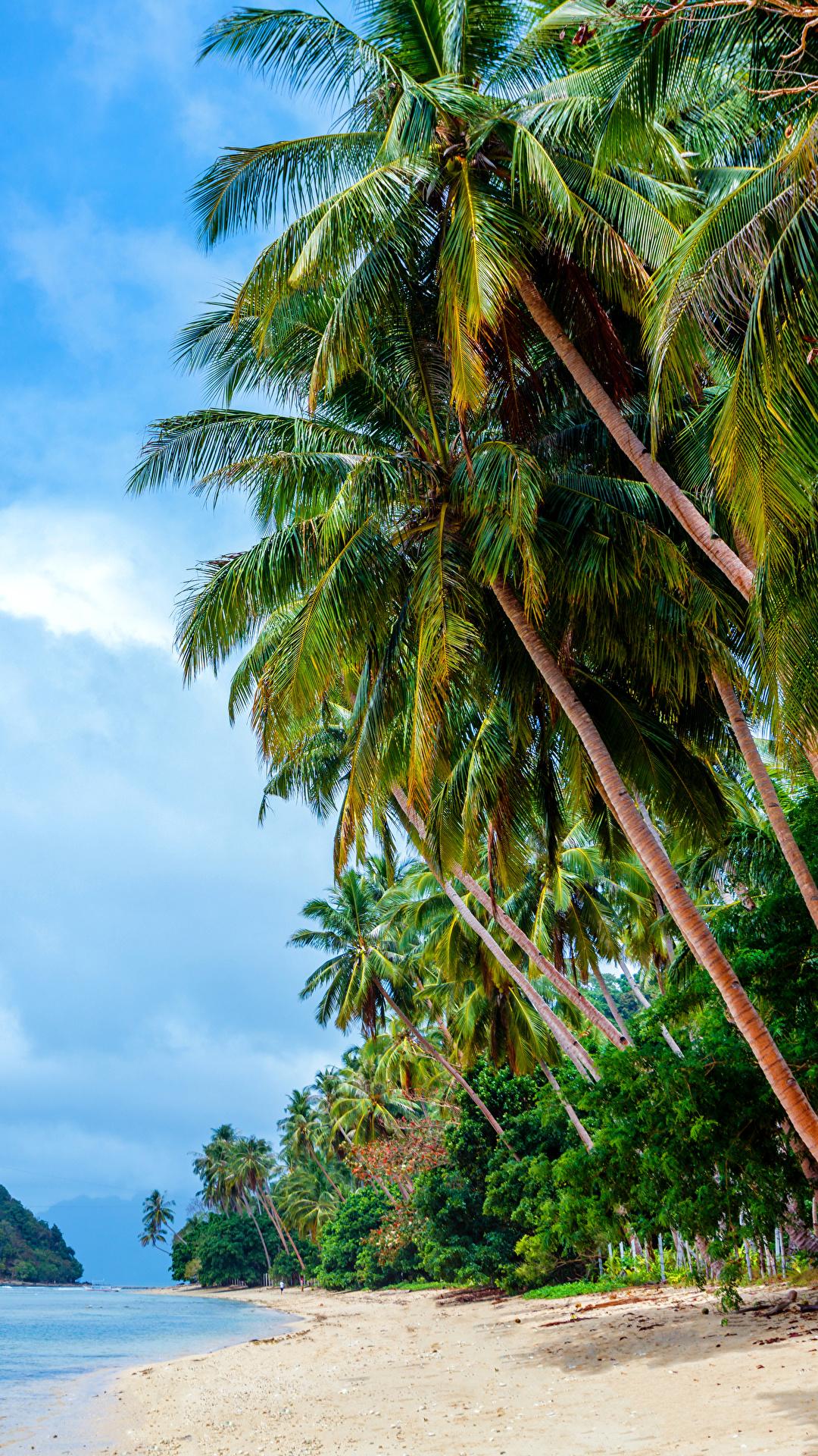 Обои Филиппины Пляж Природа Небо Пальмы Тропики Побережье 1080x1920 берег