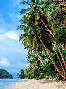 Обои Филиппины Тропический Берег Небо Пальмы Пляж
