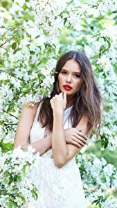 Обои Цветущие деревья Шатенки Смотрят молодая женщина