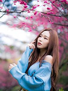 Обои Азиаты Шатенки Боке Поза Свитере Красивые