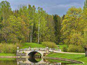 Фотографии Россия Санкт-Петербург Парки Реки Мосты Деревья Pavlovsk Природа