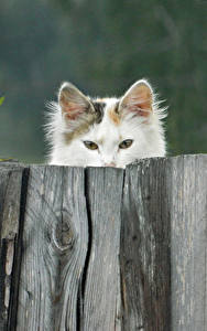 Картинка Коты Забором Деревянный животное