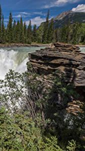 Картинки Канада Водопады Утес Ель Радуга Alberta Природа