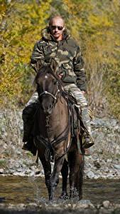 Фотографии Владимир Путин Мужчина Лошади Знаменитости