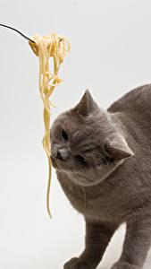 Фотография Коты Серый фон Макароны Животные