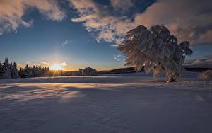 Фото Зимние Рассветы и закаты Снег Деревья Лучи света
