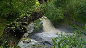 Фотографии Тропики Водопады Ствол дерева Мхом Jungle Природа