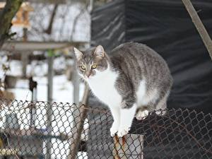 Картинки Коты Забор Животные