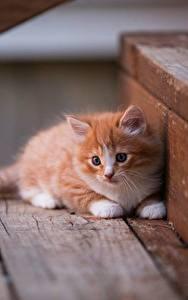 Фотографии Коты Котенка Рыжий Лестницы Животные