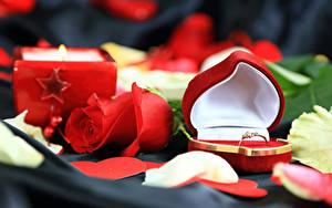 Обои День всех влюблённых Розы Красный Сердечко Коробка Кольцо